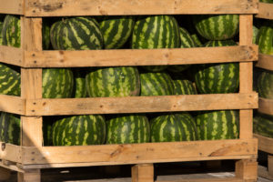 Watermelons in Pallet Crate